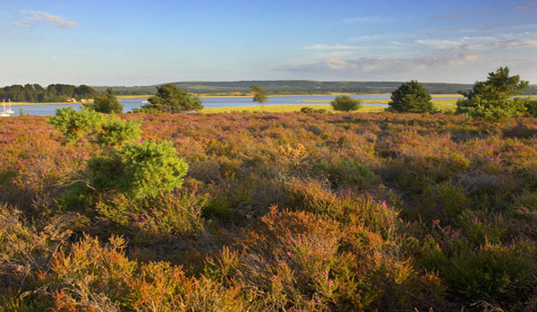 luxury accommodation near wareham arne nature reserve
