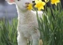 Spring has finally Sprung in Dorset!!