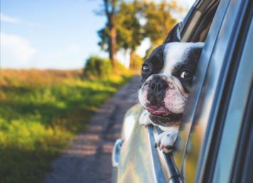 dorset dog friendly holiday cottages