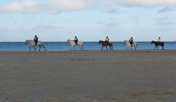 holiday home in studland beach horse riding