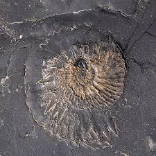 fossil hunting at kimmeridge